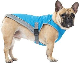 Dog in a cooling vest