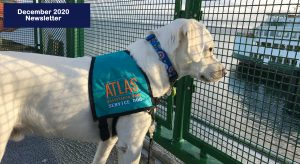a white labrador with a teal atlas vest looking out at the water through a grid