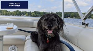 A black labradoodle laying on a boat facing the camera