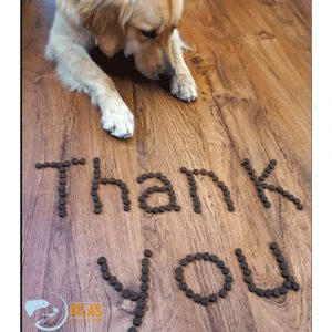 """A golden retriever laying on the floor. In front of him is """"thank you"""" spelled out in kibble"""