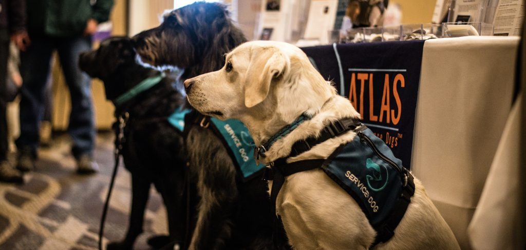 3 service dogs stand side by side in profile view.